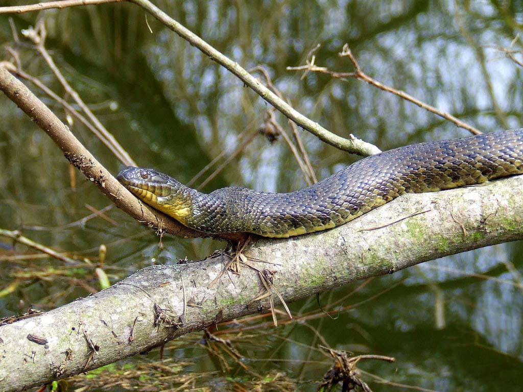 К чему снятся змеи дома девушке