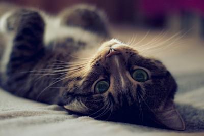 К чему снится убить кошку толкования сонника