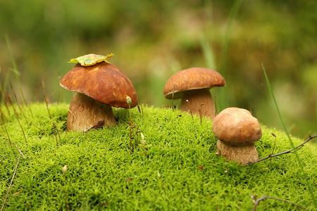 Собирать грибы во сне сонник миллера