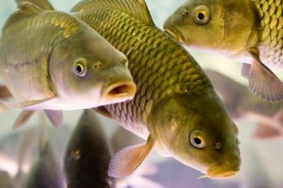 Если снится рыба женщине по соннику ванги