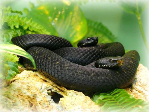 Сонник миллера змеи во сне много