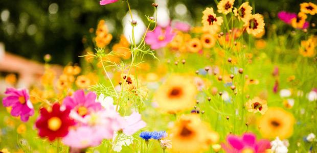 Сонник цветков ванга