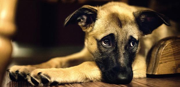 К чему снится собака сонник ванги