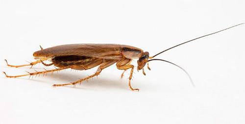 Сонник толкование тараканы видеть во сне