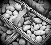 Сонник к чему снится сажать картошку