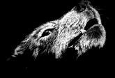 Сонник стая волков к чему снится стая волков во сне