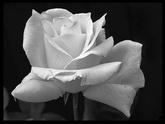 Сонник Белый цвет: к чему снится Белый цвет во сне