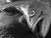 Сонник Рыбья Голова женщине во сне видеть к чему приснилась