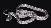 К чему снятся змеи женщине, мужчине. Сонник